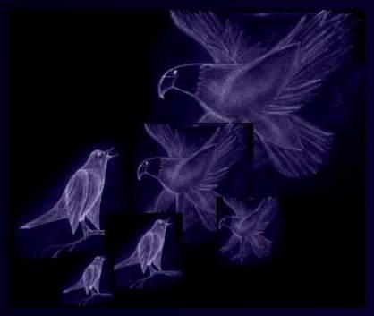 Amsel und Adler (aus einer Bleistiftzeichnung von Ara)